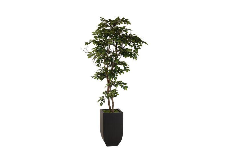 Sakaki Tree ,  , large_gray