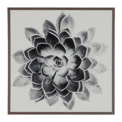 Succulent Study II Product Tile Image 073124B