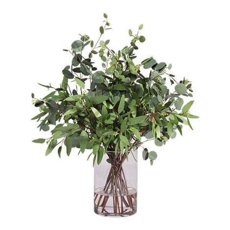 Eucalyptus in Cylinder Vase Product Tile Image 442233