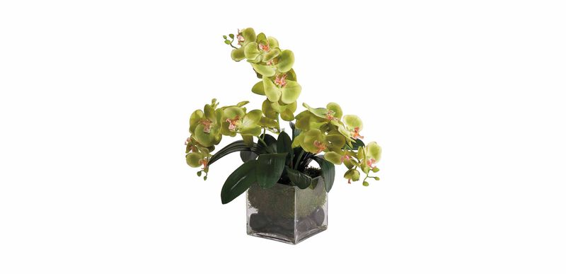 Green Phalaenopsis Orchids