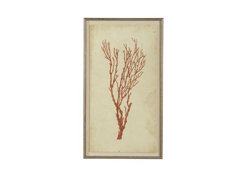 Antique Coral Specimen A