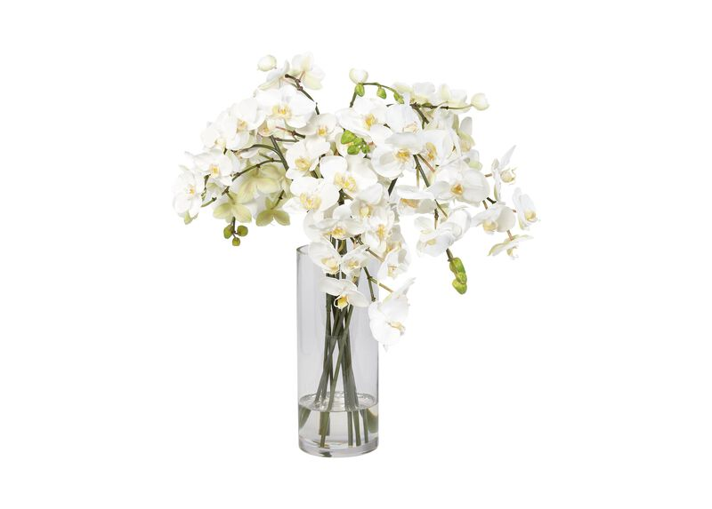 White Orchids in Glass Vase ,  , large_gray