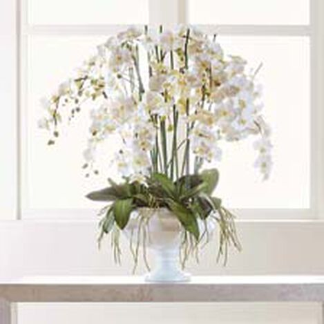 White Phalaenopsis Orchid in Pedestal Bowl Product Tile Hover Image 442208