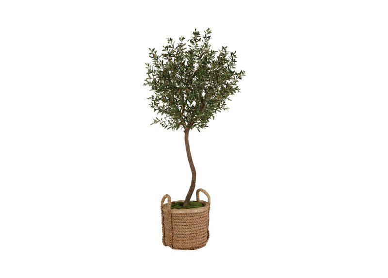 Black Olive Tree ,  , large_gray