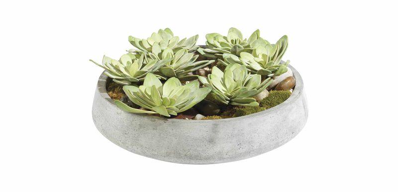 Echeveria in Bowl