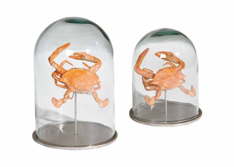 Crab in Glass Cloches ,  , large_gray