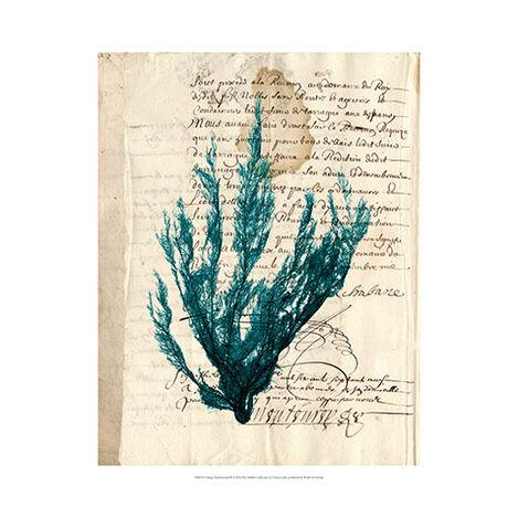 Vintage Teal Seaweed II ,  , large