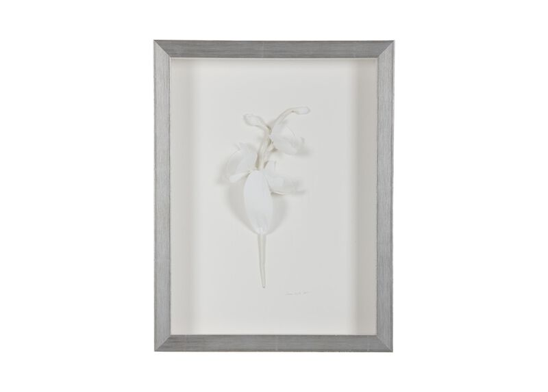 White Orchid ,  , large_gray