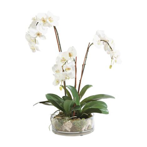 Triple Phalaenopsis in Glass Product Tile Image 444547