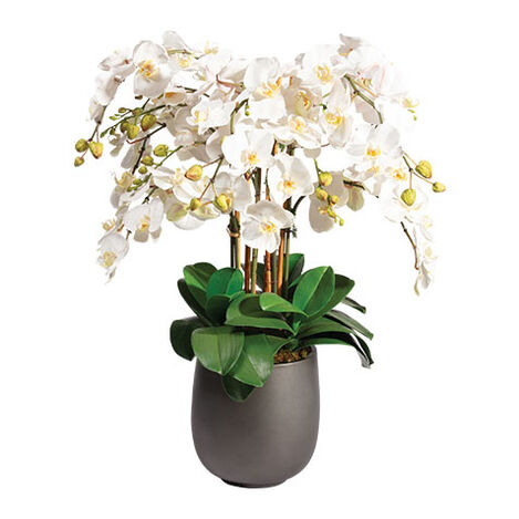 Phalaenopsis Orchid in Urn Product Tile Image 442207