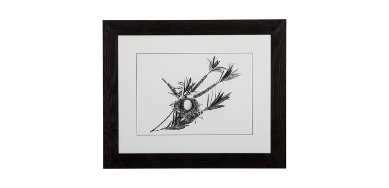 Graphic Nest II