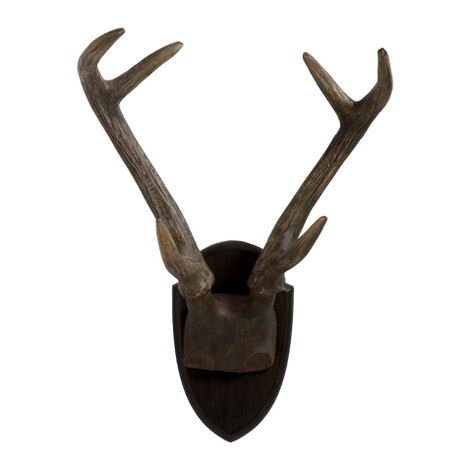 Antique Antlers ,  , large