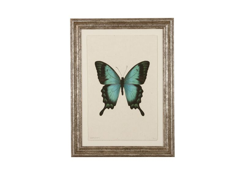 Butterfly Study I ,  , large_gray