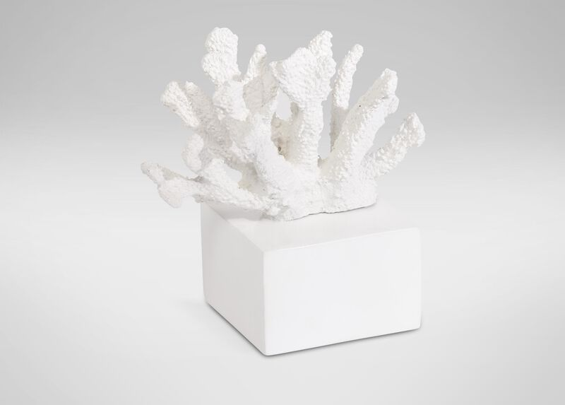 Staghorn Coral ,  , large_gray