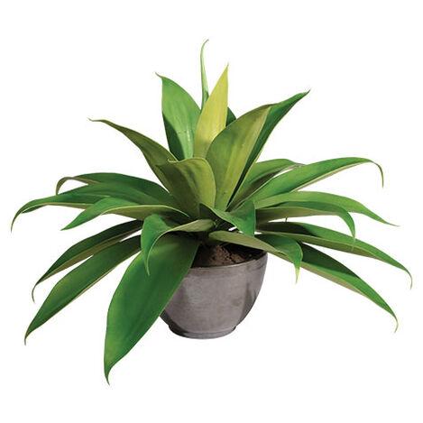 Aloe Plant in Concrete Bowl Product Tile Image 442231