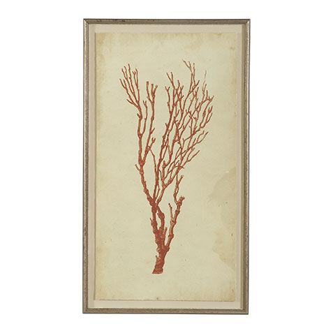 Antique Coral Specimen A , , Large ...