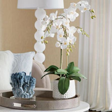 Phalaenopsis in Ceramic Pot Product Tile Hover Image 444557