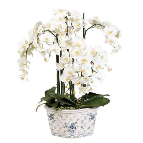 Phalaenopsis in Ceramic Pot Product Tile Image 445788