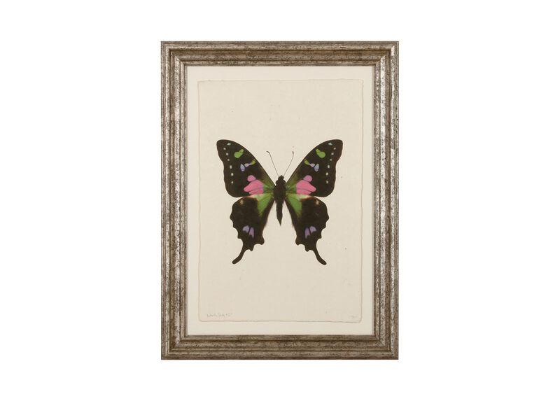 Butterfly Study II