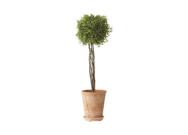 Tall Boxwood Topiary
