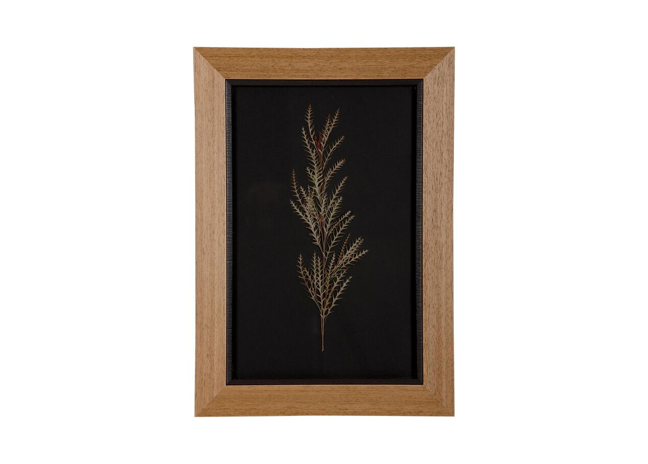 Botanicals on Black VIII | Pressed Botanicals | Ethan Allen