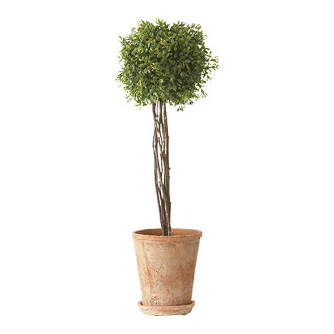 Tall Boxwood Topiary Product Tile Image 445119