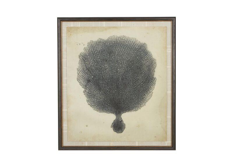 Antique Coral Specimen I ,  , large_gray