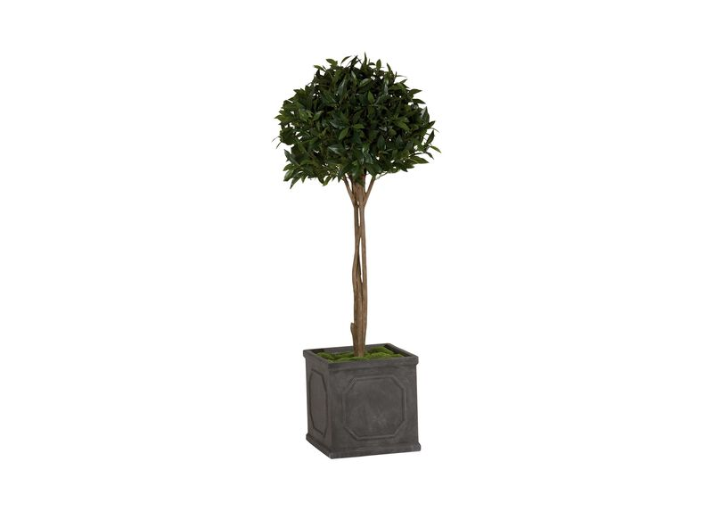 Single Bayleaf Ball Topiary ,  , large_gray