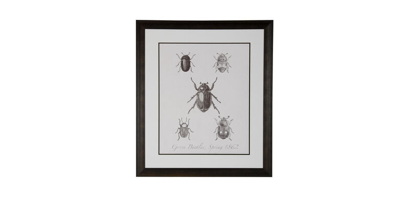 Woodland Insects II