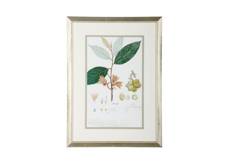 Botanical VII ,  , large_gray