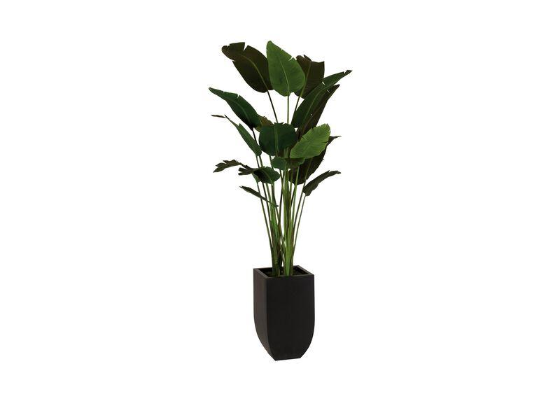 Traveler's Palm Tree ,  , large_gray
