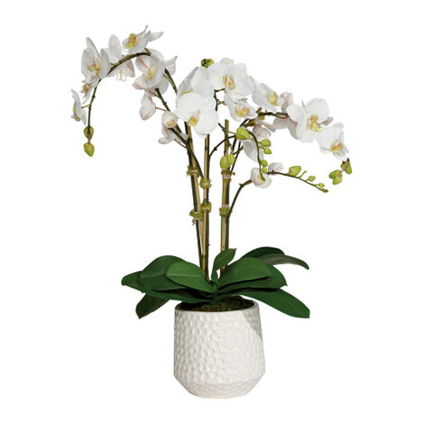 Phalaenopsis in Ceramic Pot Product Tile Image 444557