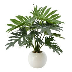 Philodendron in White Pot Recommended Product