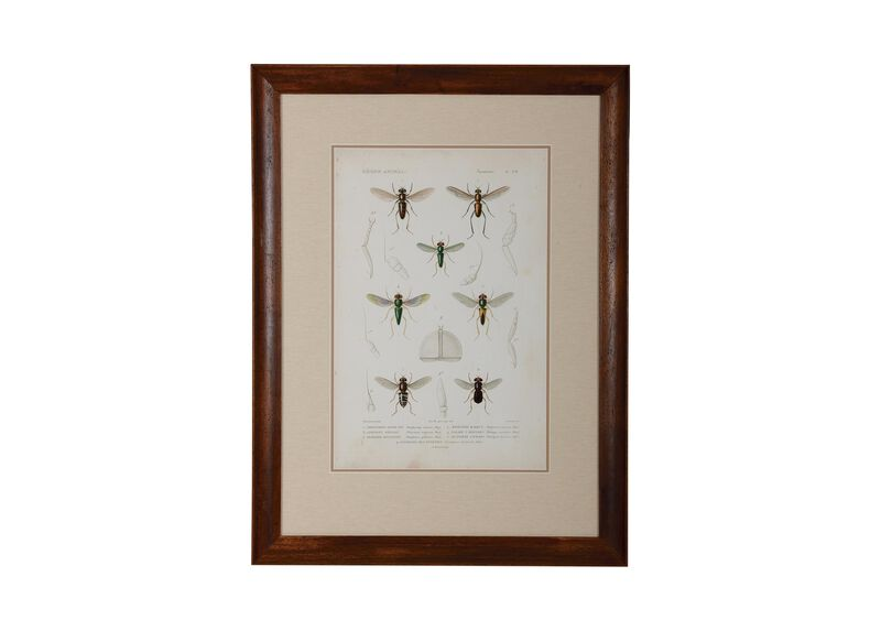 Insect Study II