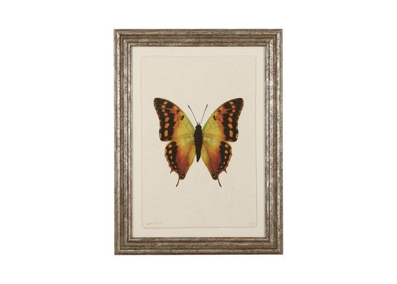 Butterfly Study III