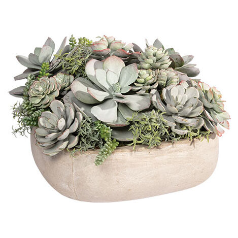 Mixed Succulents in Cement Tray Product Tile Image 442229