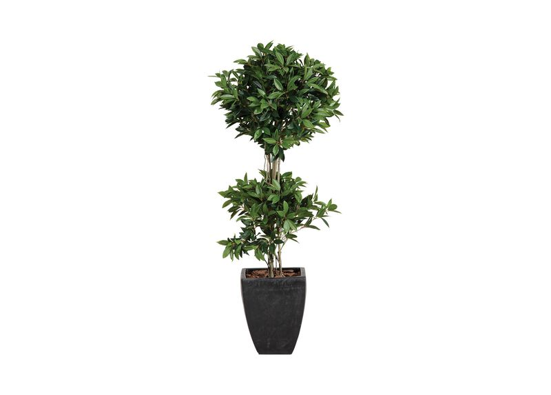 Double Laurel Topiary