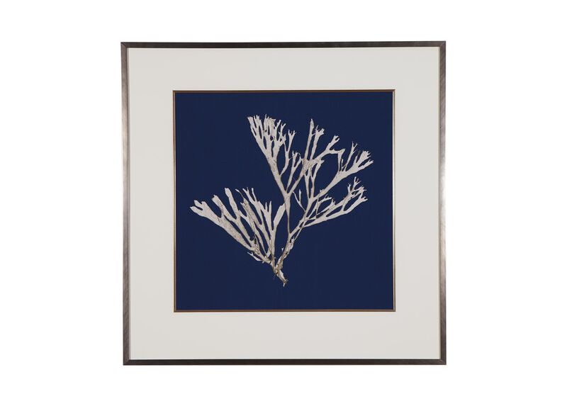 Seaweed on Navy II