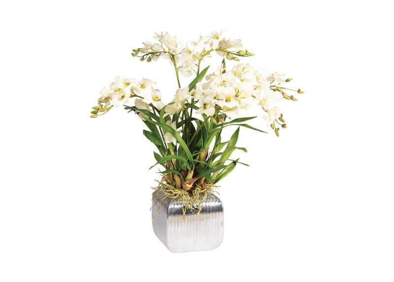 Dendrobium Orchid in Planter
