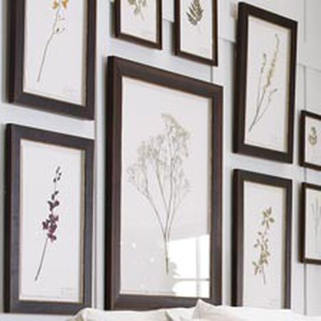 Dendrobium ,  , hover_image