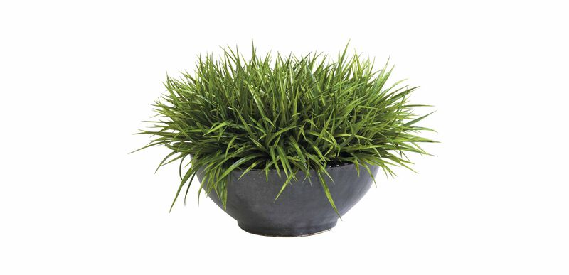 Sword Grass in Bowl