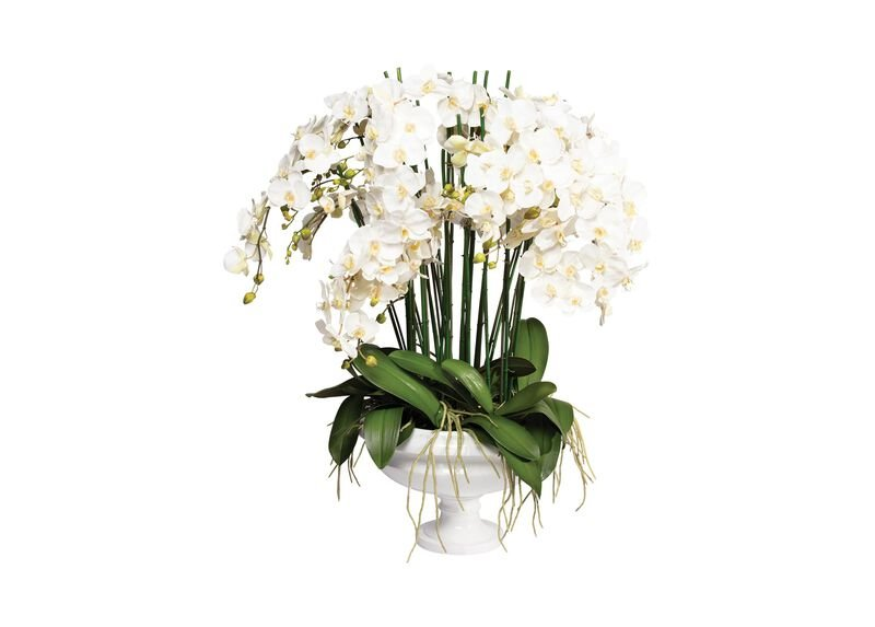 White Phalaenopsis Orchid in Pedestal Bowl