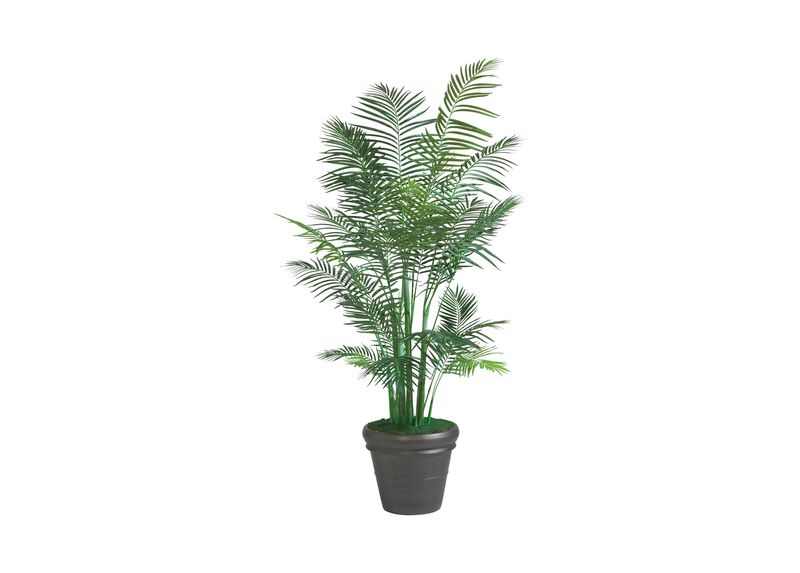 Grand Areca Palm Tree ,  , large_gray