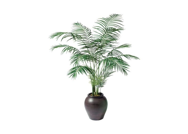 Areca Palm Tree ,  , large_gray