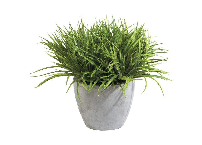 Grass in Aged Gray Pot