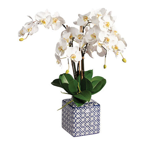 Phalaenopsis Orchid in Trelliage Vase Product Tile Image 442210