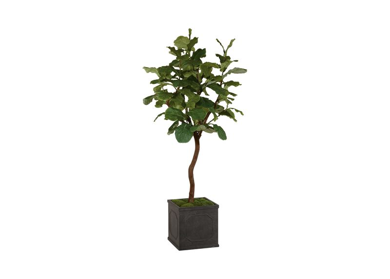 Fiddle Leaf Fig Tree ,  , large_gray