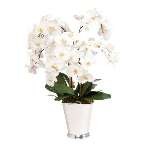 White Orchid Arrangement Product Tile Image 445790