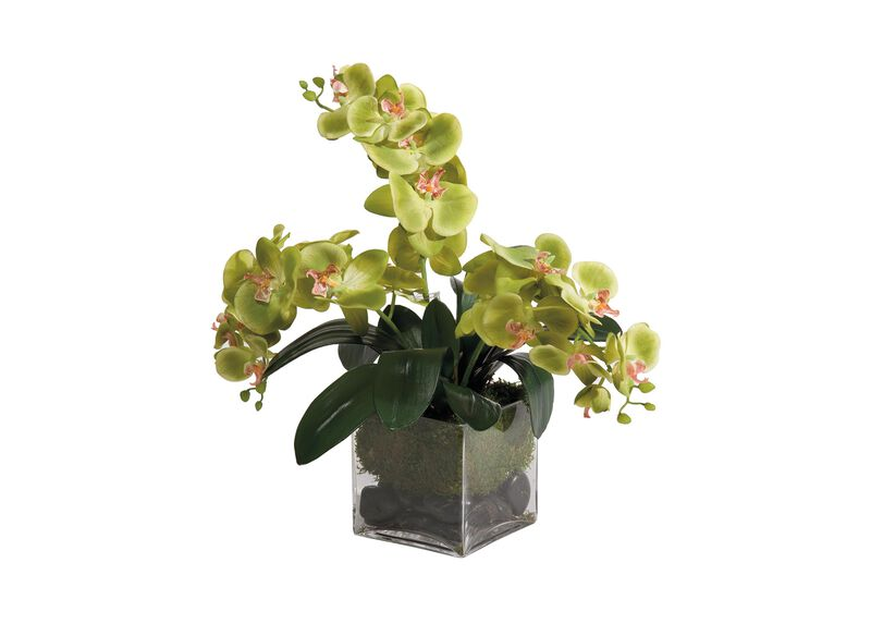 Green Phalaenopsis Orchids ,  , large_gray