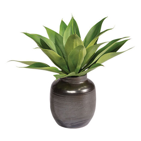 Aloe in Concrete Pot Product Tile Image 442230